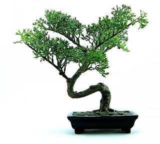bonsai-316573_960_720.jpg